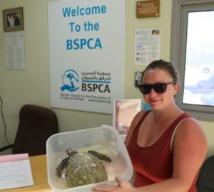 bspca-turtle-rescue-copy
