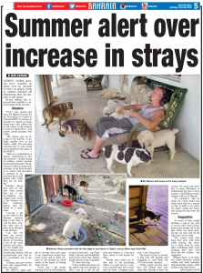 Summer Alert over increase in strays
