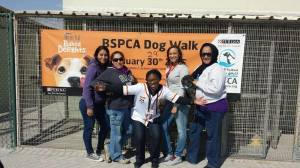 bspca dog walk volunteers