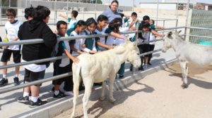 nassem-school-at-bspca