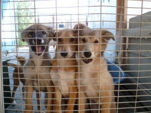 5F5B9_Puppies_in_quarantine