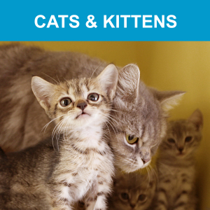 BSPCA » Pet Care Guide