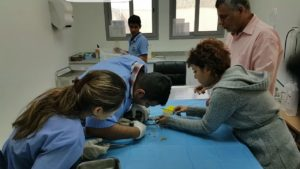 bspca-seaturtle-treatment